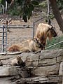 San Diego Zoo April 2013 06.JPG