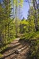 Santa Fe National Forest (7271537506).jpg