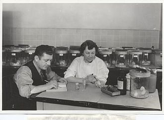 Sara Branham Matthews - Sara Branham inoculating antiserum into a mouse to determine whether it would protect against meningitis, Robert Forkish assisting, 1937