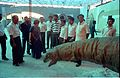 Saroj Ghose and other Dignitaries Watching Apatosaurus - Dinosaurs Alive Exhibition - Science City - Calcutta 1995-06-15 116.JPG
