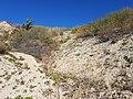 Schottergrube nordwestlich von Asparn an der Zaya sl13.jpg