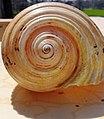 Sea snails.jpg