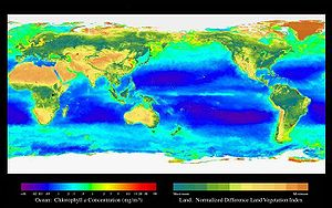 Sustainable fishery - SeaWiFS map showing the levels of primary production in the world's oceans