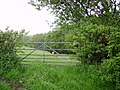 Sheep and Gate - geograph.org.uk - 170325.jpg