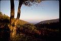 Shenandoah National Park SHEN9186.jpg