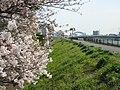Shin-Naka River in Haruechō 3-chōme, Edogawa-ku, -March 2007 a.jpg