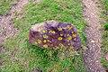 Siderite Nodule, Hengistbury Head - geograph.org.uk - 1048295.jpg