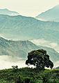 Sierra Madre Tanay.jpg