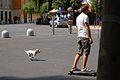 Skatedog (8191384952).jpg