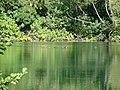 Skradinski Buk 0808 2010 - panoramio (3).jpg