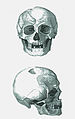 Skull form Ladánybene.jpg