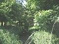 Small plantation around a stream - geograph.org.uk - 1398520.jpg