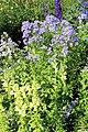 Sofiero (Helsingborg), flower bed in flower garden.JPG