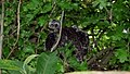 Sparrowhawk Nest 09-07-09 (4483095060).jpg