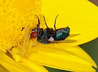 Spider and fly April 2010-2.jpg
