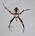 Spider b1.jpg