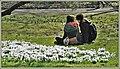 Spring (40491725074).jpg