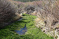 Spring Mountains Willow Creek 1.jpg