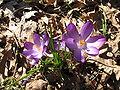 Spring flowers.JPG