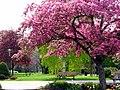 Spring in Jackson Park (4546950110).jpg