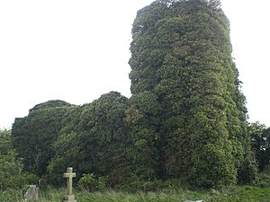 Bircham Tofts - The overgrown ruins of the church of St Andrew in Bircham Tofts