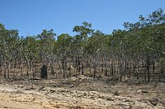 Starcke-national-park-cape-york-queensland-australia.JPG