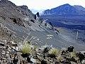 Starr-021024-0005-Deschampsia nubigena-on West rim-Kalahaku HNP-Maui (24185230569).jpg