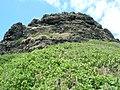 Starr-050419-0391-Schinus terebinthifolius-habit-Mokolii-Oahu (24746034945).jpg