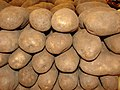 Starr-070730-7811-Solanum tuberosum-fruit-Foodland Pukalani-Maui (24262257664).jpg