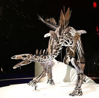 Thyreophora - Image: Stegosaurus (Natural History Museum, London)