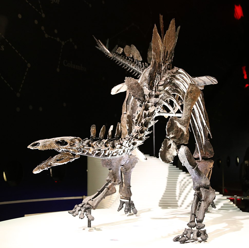 Stegosaurus (Natural History Museum, London)