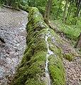 Steinerne Rinne bei Erasbach - geo.hlipp.de - 42159.jpg