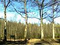 Steinsel, Luxembourg - panoramio (8).jpg