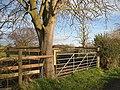 Stock pen and conker tree - geograph.org.uk - 958670.jpg