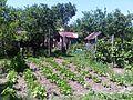 Straone Garden - panoramio.jpg