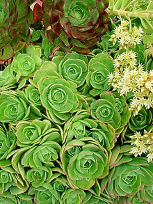 Succulents green.jpg