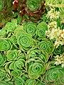 Succulents green.jpg