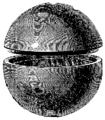 T3- d383 - Fig. 256. — Bombe sphérique coulée en deux parties.png