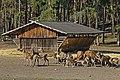TF Wildpark Johannismuehle 03-14 img03.jpg