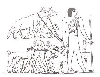 Dog breed - Tesem, an ancient Egyptian sighthound