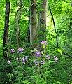 Texter Mountain Nature Preserve (Revisit) (9) (14302396996).jpg