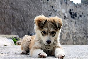The Puppy, seen in Megalochori of Santorini