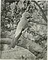 The birds of Britain - their distribution and habits (1916) (14732395396).jpg