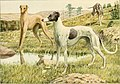 The book of dogs; an intimate study of mankind's best friend (1919) (20396800865).jpg