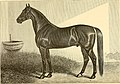 The breeds of live stock, and the principles of heredity (1887) (14594399030).jpg