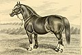The breeds of live stock, and the principles of heredity (1887) (14594631987).jpg