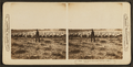Thousands of sheep on one of the large ranches of Montana, by H.C. White Co..png