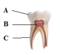 Tooth Diagram2.png