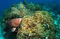 Tortugas Ecological Reserve - NOAA.jpg