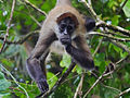Tortuguero, Costa Rica (14054529229).jpg